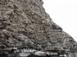 Day 138. 2 The kittiwake colony on the striated cliffs on the south side of Ekkeroy